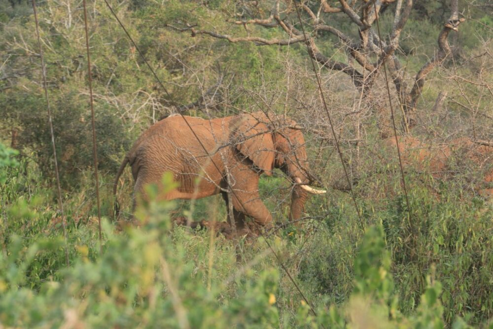 guaranteed rhinos spot